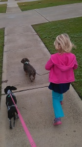 Going on a walk 2015